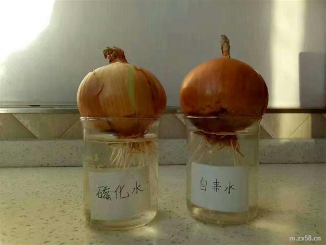 磁化水实验对比