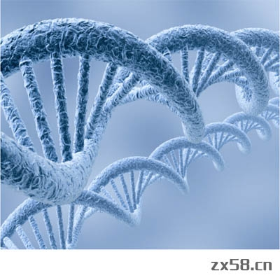 健海自身免疫基本基因检测