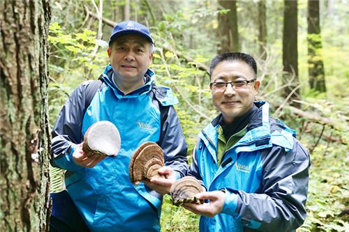 安惠董事长陈惠陪同加拿大健康科学院院士王玉琢教授考察野生菌物资源