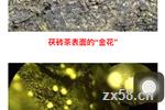 金花与刘仲华