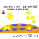 细胞膜水通道
